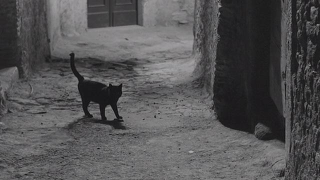 gato-mafioso
