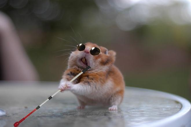 blind hamster
